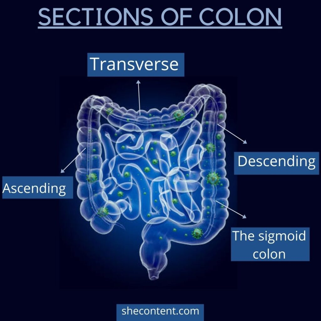 sections of colon